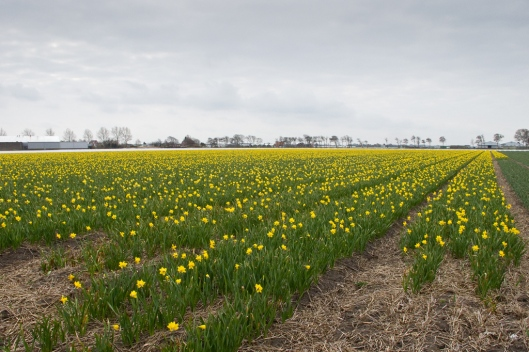 _IMG_5139_north of Lisse
