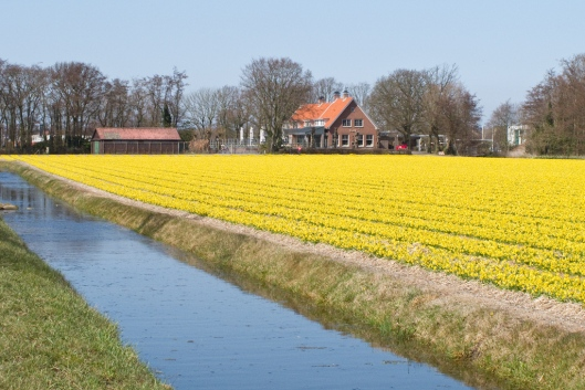 _IMG_5154_noord_holland