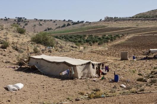 _IMG_6248_King's Highway_Bedouins