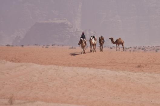 _IMG_6625_Wadi Rum_camel