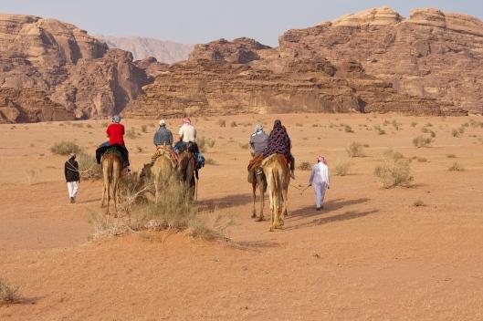 _IMG_6696_Wadi Rum_camel