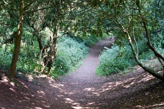 _IMG_5867_Wandlebury Park