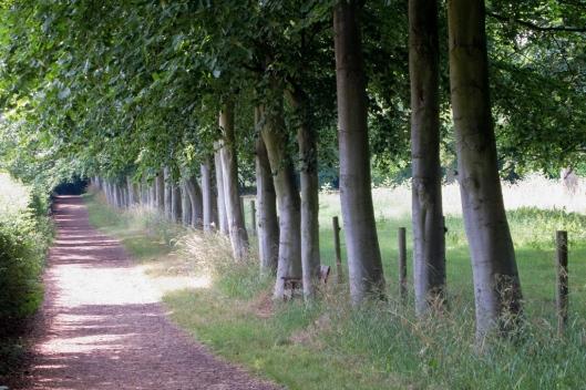 _IMG_5879_Wandlebury Park
