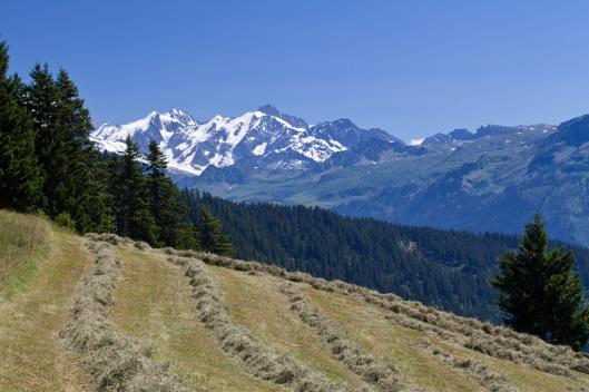 07_IMG_1056_Tour de bisanne trail