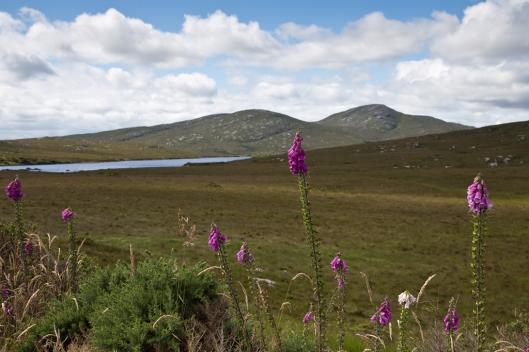 _IMG_3279_Glenveagh NP_Lough Inshagh Trail