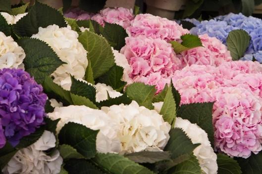 04_IMG_7402_London_columbia Road flower market