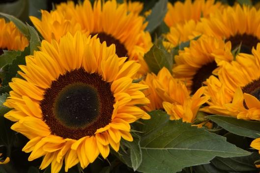 05_IMG_7399_London_columbia road flower market