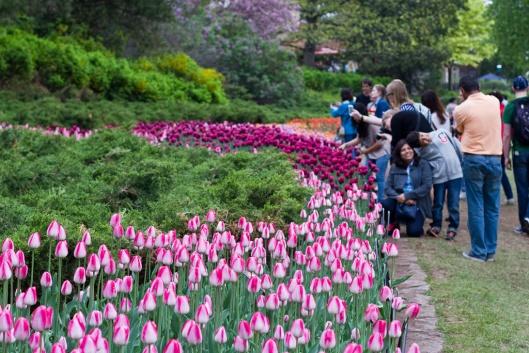 02_IMG_0042_Ottawa_Tulip Festival