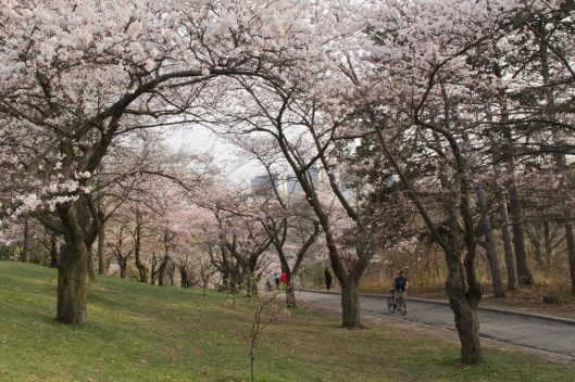 _IMG_9035_Toronto_High Park