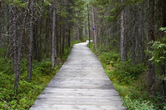 _IMG_0568_Algonquin Park_Spruce Bog Trail