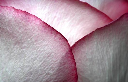 02_IMG_6211_rose