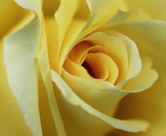 04_IMG_2269_Rose_Edward Garden