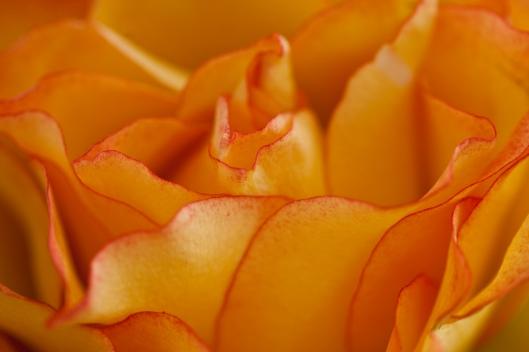 05_IMG_2798_Roses