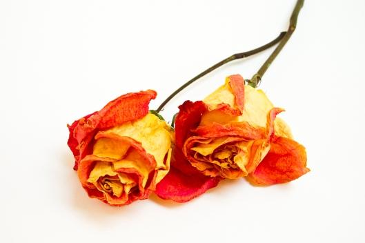 06_IMG_0288_roses