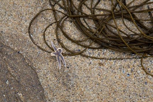_IMG_3201__Ireland_Malinbeg beach_2014