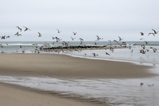 _IMG_4084_Cape Cod_National Seashore_2009
