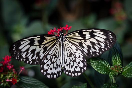 _IMG_7831_Jardin botanique