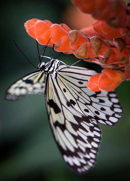 _IMG_7866_Jardin botanique