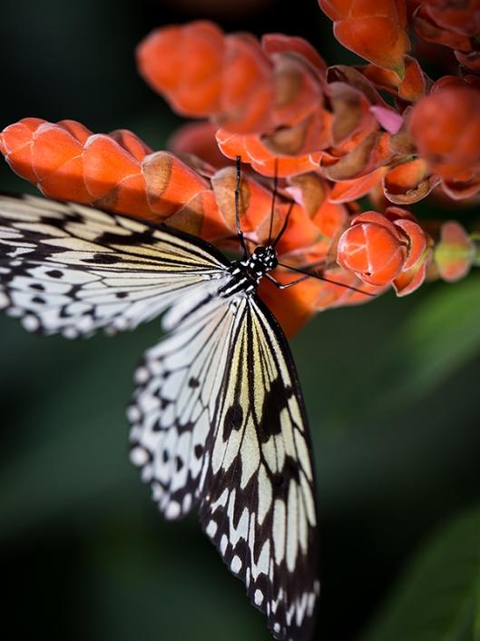_IMG_7868_Jardin botanique