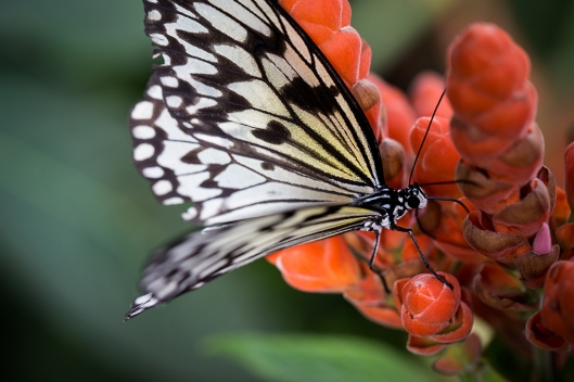 _IMG_7873_Jardin botanique