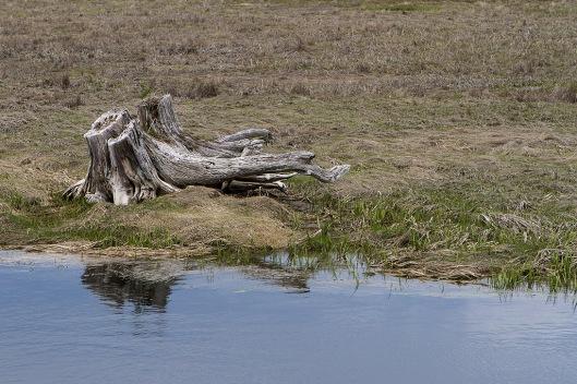 08_IMG_1669_Scarborough Marsh Land
