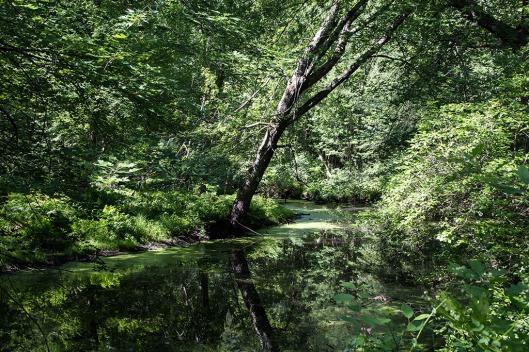 _IMG_8147_Vermont_Missisquoi Wildlife Reserve