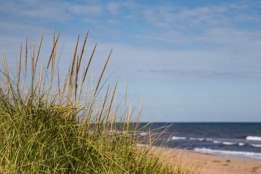 04_img_8676_greenwich-np_dunes