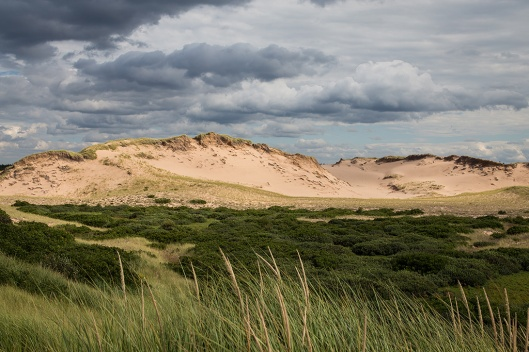 06_img_8716_greenwich-np_dunes
