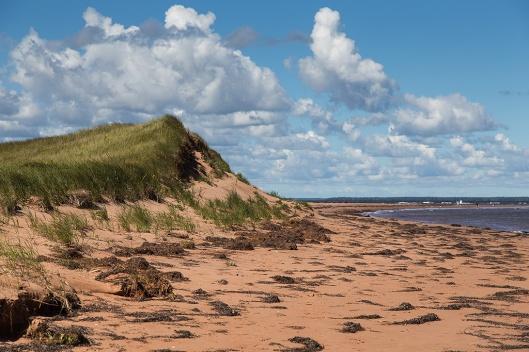 _img_8853_cabot-beach-pp
