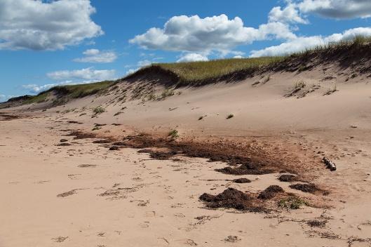 _img_8949_cavendish-beach
