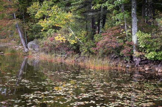 12_img_9086_long-pond