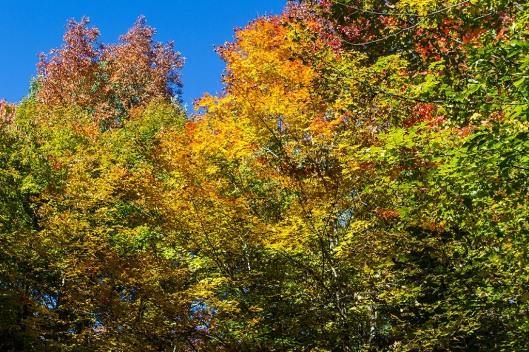 _img_3561_parc-yamaska_sentier-la-forestiere
