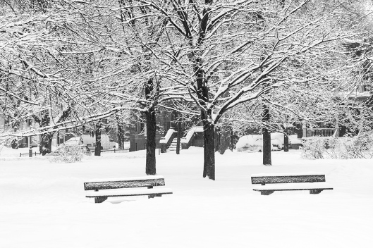 _img_1804_parc-outremont